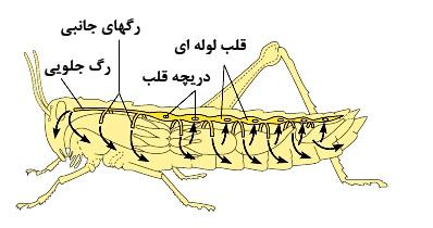 تحقیق در مورد حشرات کلاس چهارم