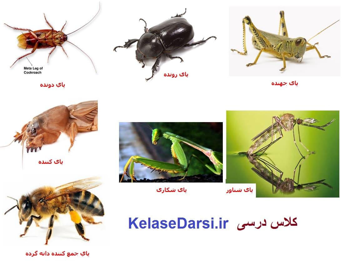 انواع پای حشرات